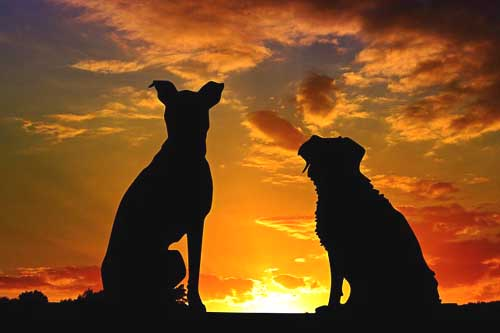 dogs enjoying sunset - dog ramp for a camper