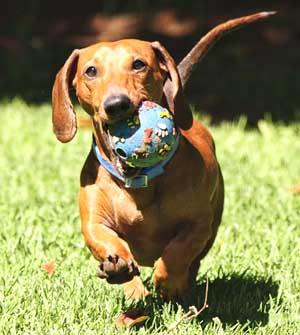 motorhome dog accessories
